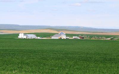 Toluca Farm