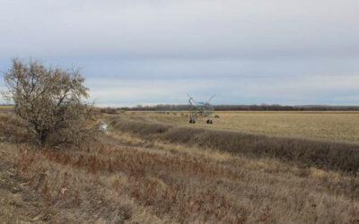 North Sidney Irrigated Farm